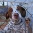 La protección y el cuidado animal como forma de vida