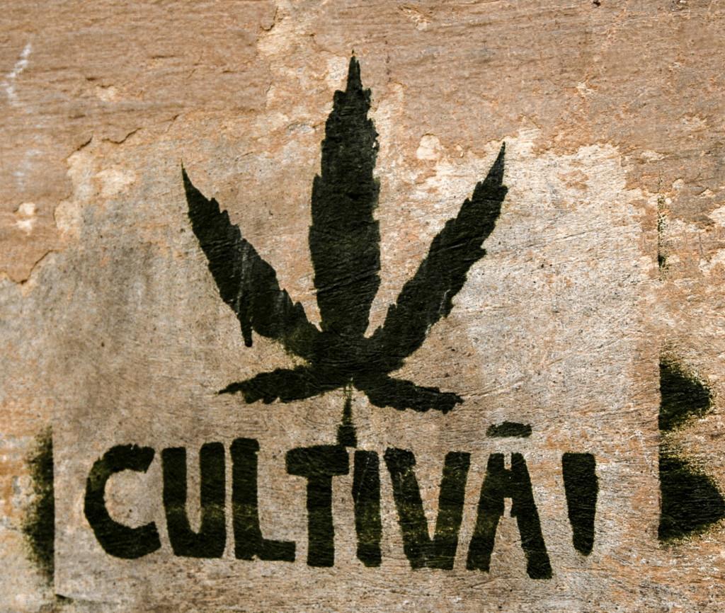 CSC, marihuana, fumar