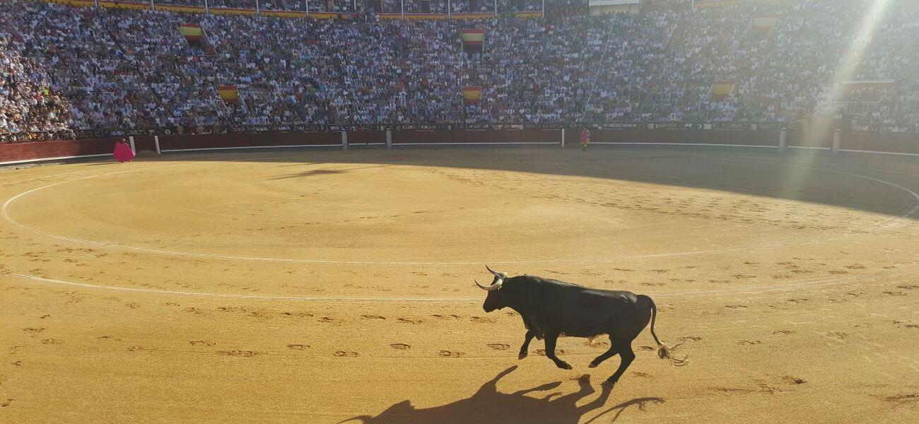 Toro, Madrid, Las Ventas, Plaza de toros, Feria San Isidro, Tauromaquia