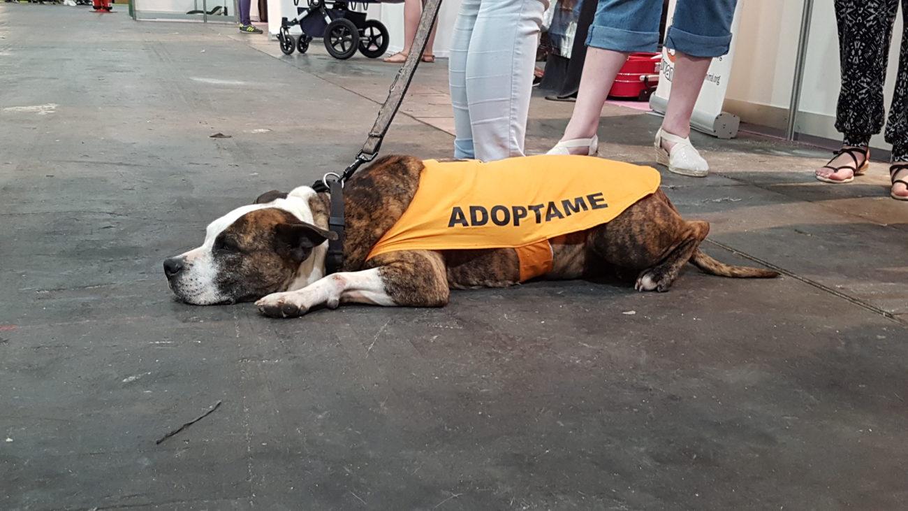 perro, adopción, abandono, maltrato, animal, protectoras