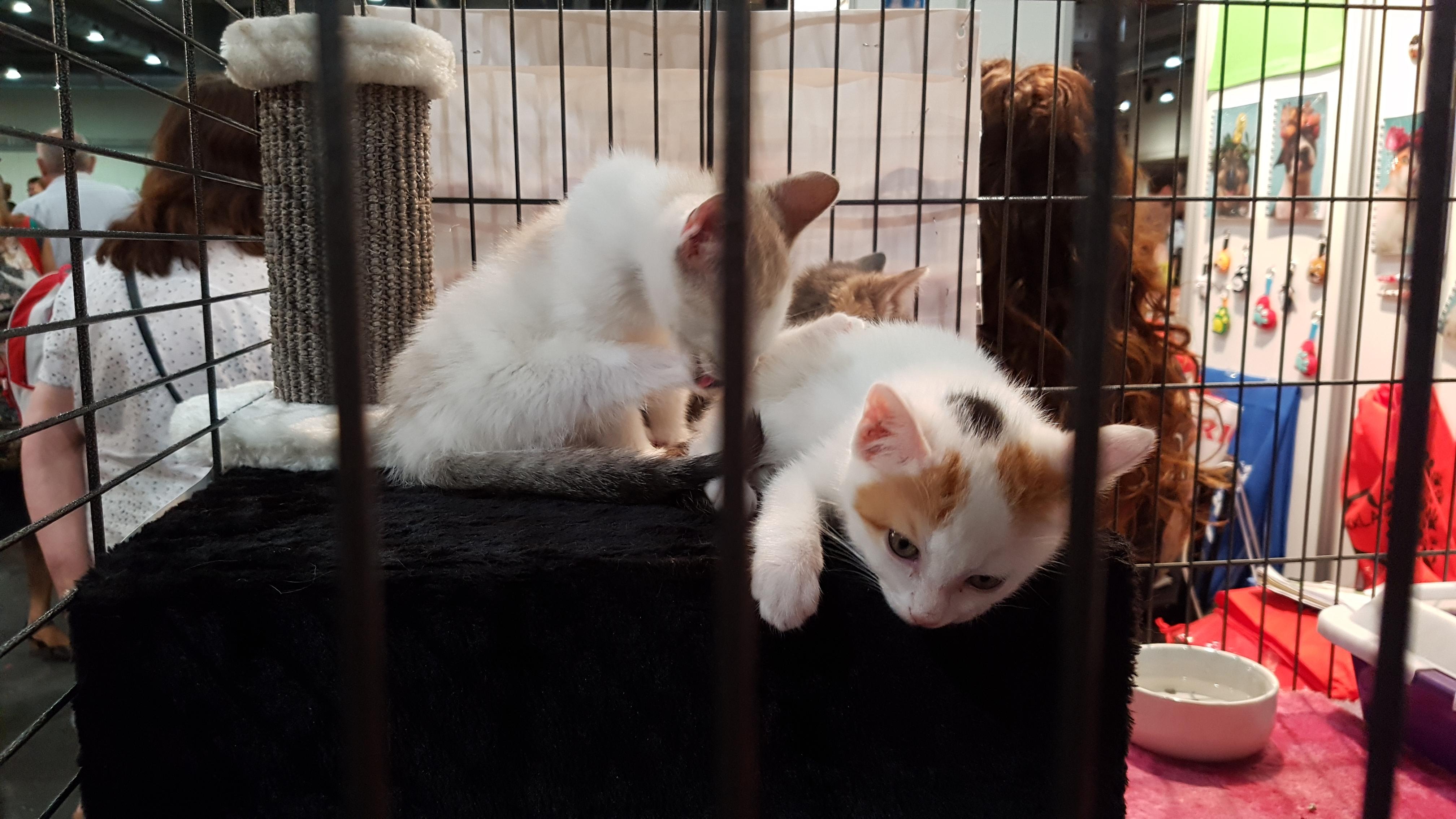 gatos, , adopción, abandono, maltrato, animal, protectoras