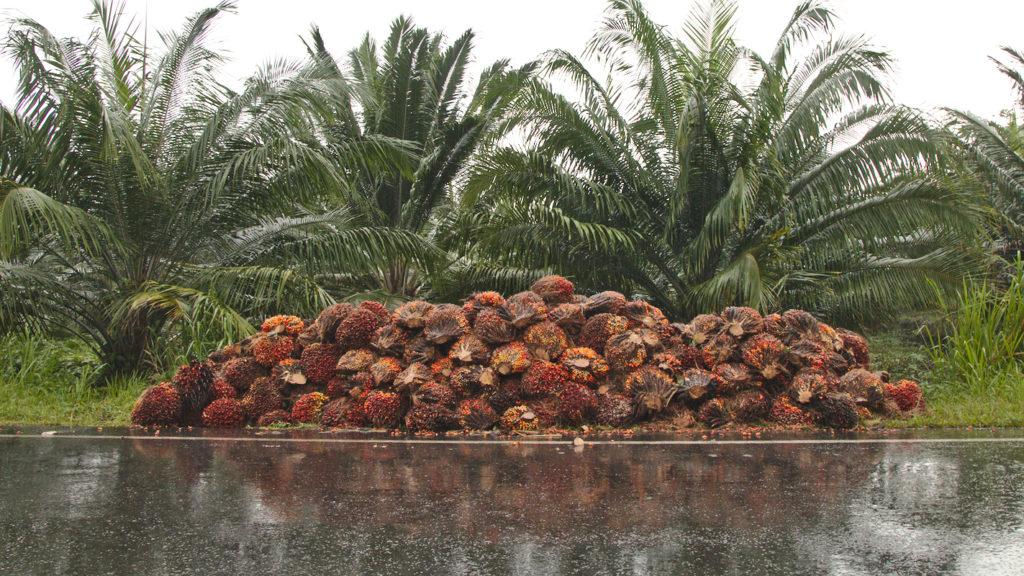 aceite de palma, bosque, producción, cultivo