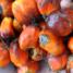 Batalla contra el aceite de palma